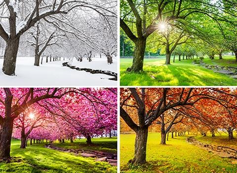 intemporelle-saisons
